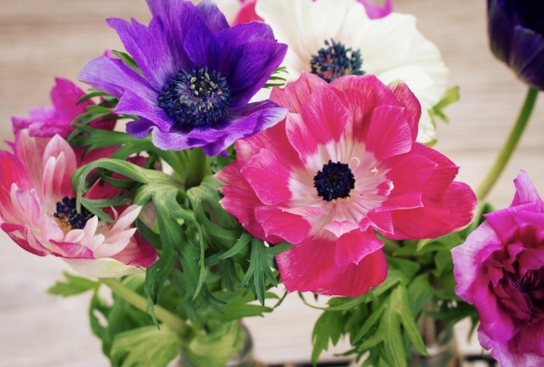 bouquet, anemone, flower garden, nature