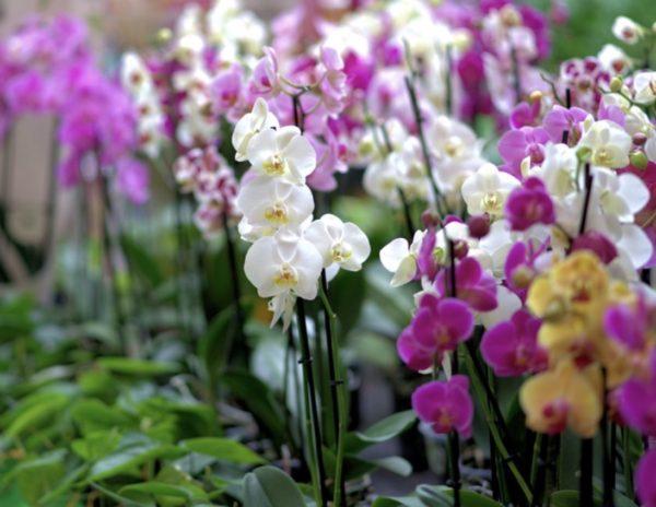bouquet, orchid, flower garden, nature